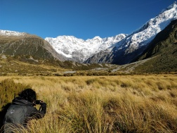 Venturing into the alpine tussock