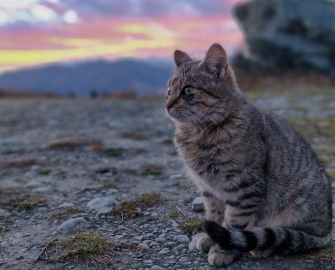 campsite kitty