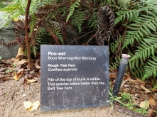Funny plant name at Melbourne Museum