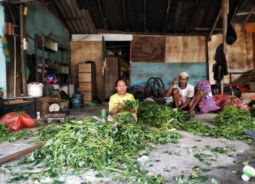 North Kuta family preparing their Kangkung (Indonesian spinach) for market.