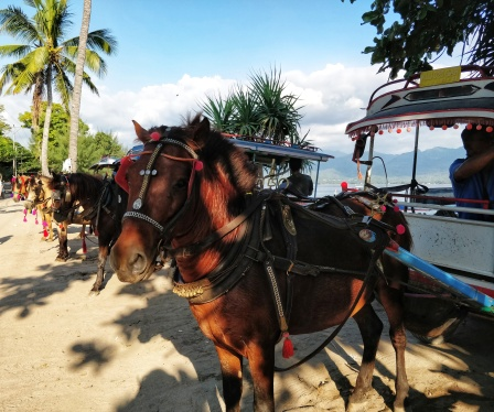 Cute horses for transporting heavy goods and lazy tourists.